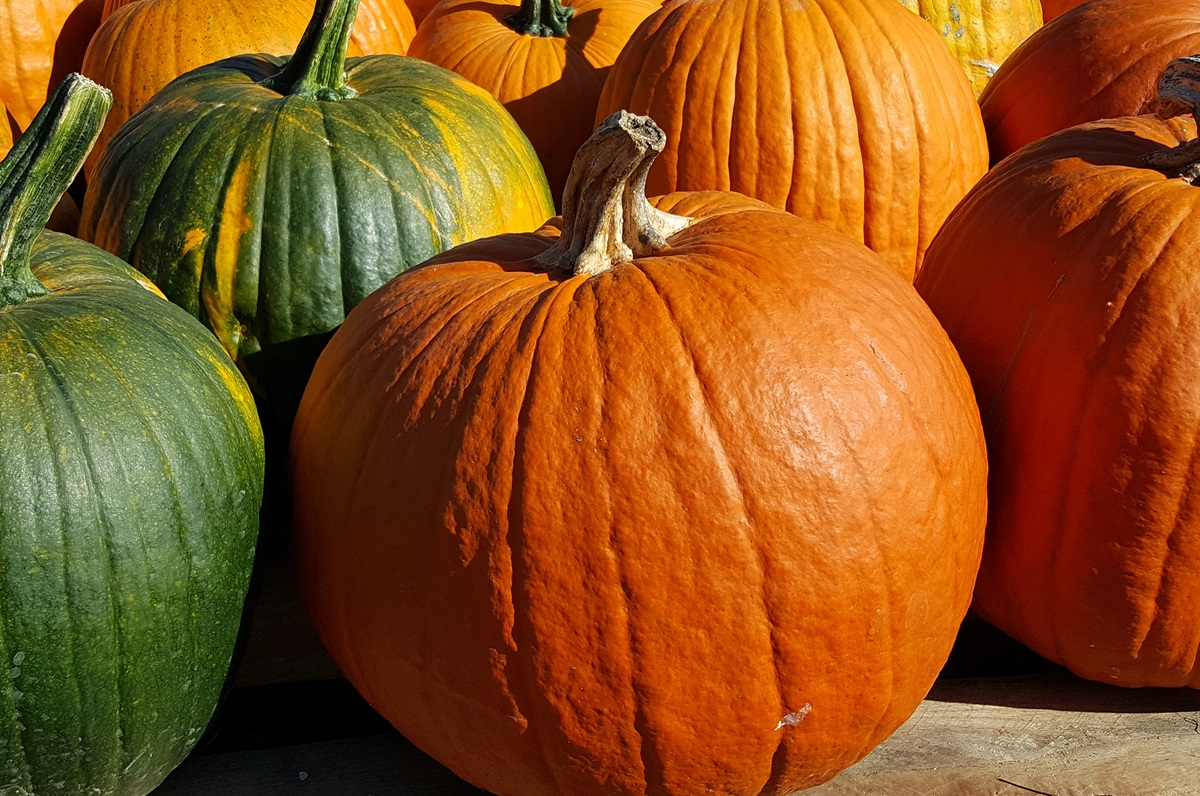 Pumpkins fill the grounds of the 12th South Farmers Market in Nashville, Tennessee. Photo by Laurens Glass.