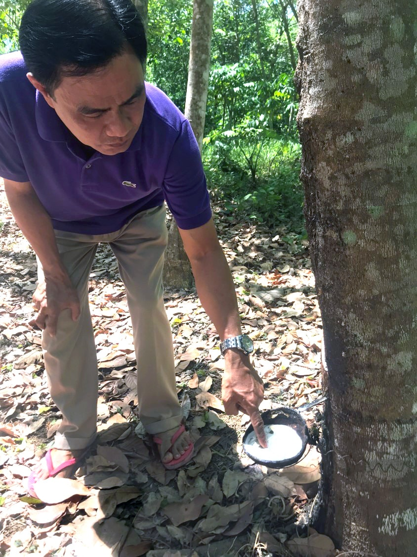 "Bishop Rodolfo Alfonso ""Rudy"" Juan crouches near a rubber tree during a visit by United Methodists to his Davao Area in southern Philippines. The Davao Area has launched a number of income-generating projects to support ministry, including tapping rubber trees. Photo by Bishop Harald Rückert of Germany."
