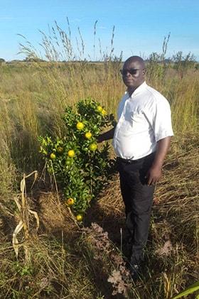 The Rev. Phanuel Razo checks on nartjies (South African tangerines) on his tree farm in the Mashonaland East Province of Zimbabwe. Photo by Chenayi Kumuterera, UMNS.