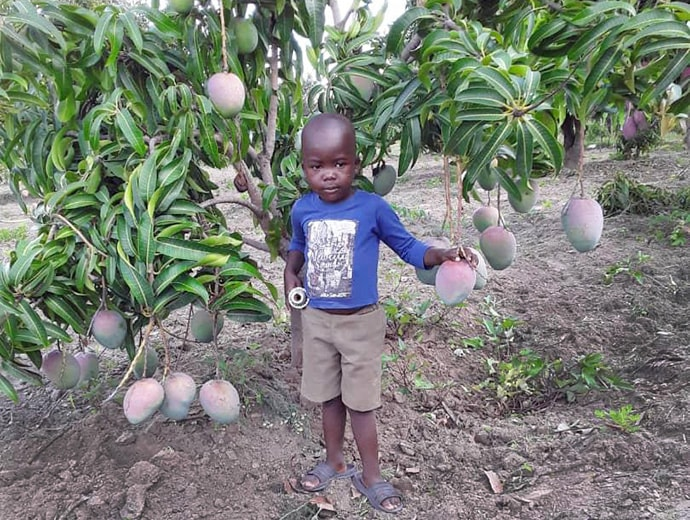 The son of the Rev. Happymore Chipere stands under a mango tree on the family's tree farm in Mujukuya, Zimbabwe. Photo by Chenayi Kumuterera, UMNS.