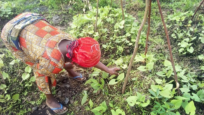 Lusinda Jacqueline, president of United Methodist Women in Bunyakiri, works on bean plants in the fields in Eastern Congo, where women are taking a lead role in fighting hunger through agriculture. Photo by Philippe Kituka Lolonga, UM News.