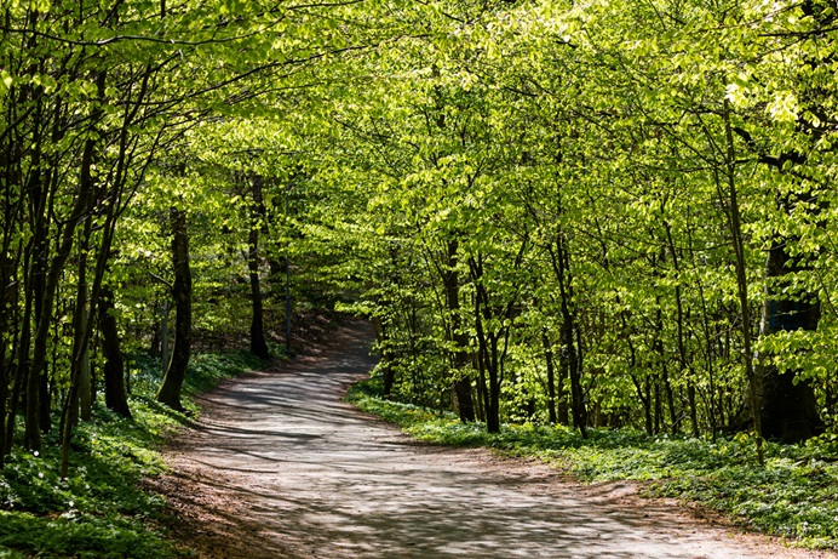 Le vert est la couleur de la Saison après l'Épiphanie. Les lectures de cette saison offrent deux voies distinctes à suivre. Photo par Susanne Nilsson, Flickr, Creative Commons.