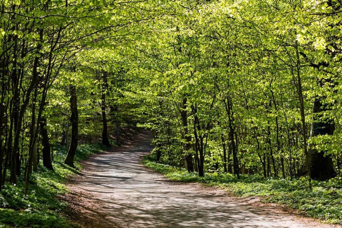 녹색은 주현절 후 강단에 사용되는 색이다. 이 시기에 우리가 읽는 성경 구절들은 예수 그리스도의 제자 삼아 이 세상을 변화시키는 교회의 선교적 사명을 뒷받침한다. 사진 수샌 닐스, 플리커, 크리에이티브 코몬즈.